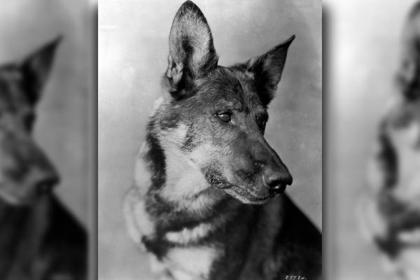 Happy Birthday Rin Tin Tin